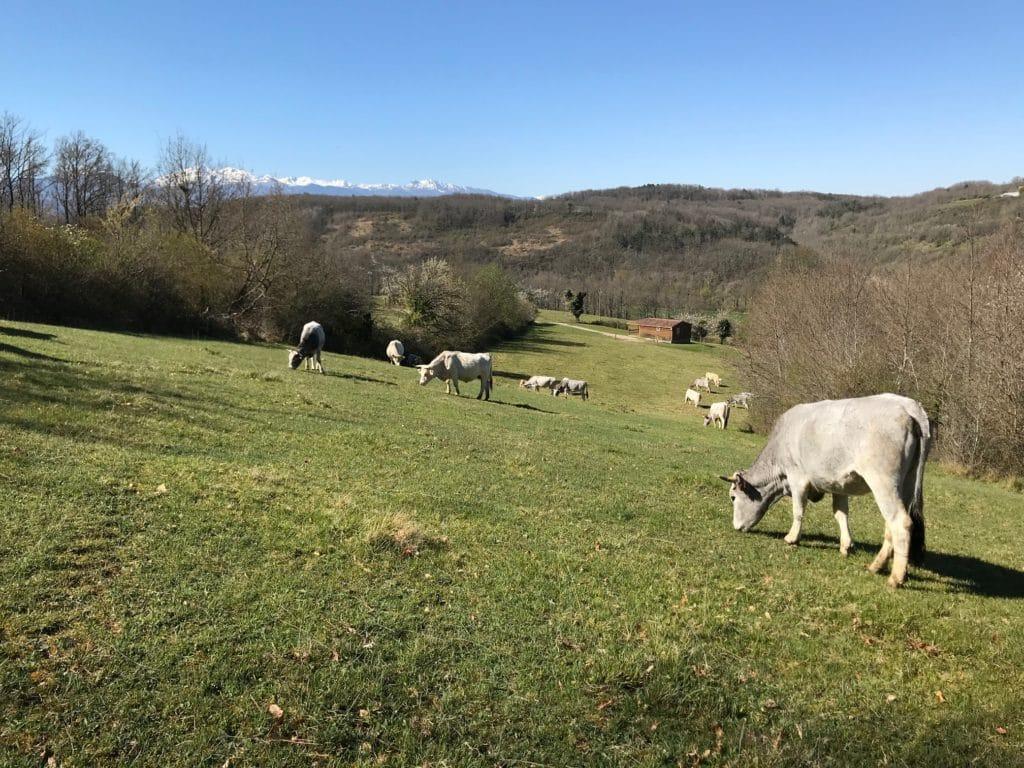 Camping à la ferme - Pyrénées - Domaine de La Besse